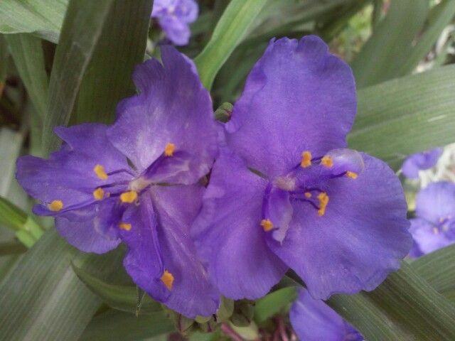 Фиолетовые...