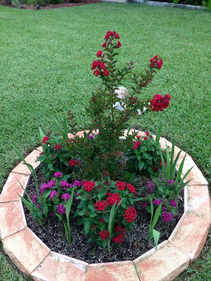 1000 images about red rocket crepe myrtles on pinterest for 1000 designs for the garden and where to find them