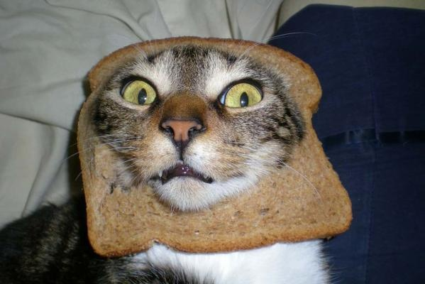 Cat Putting Hat Bread On