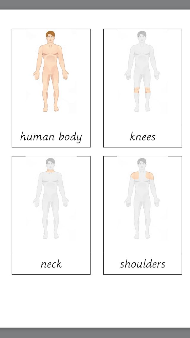 Free Montessori terminology cards showing parts of the human body