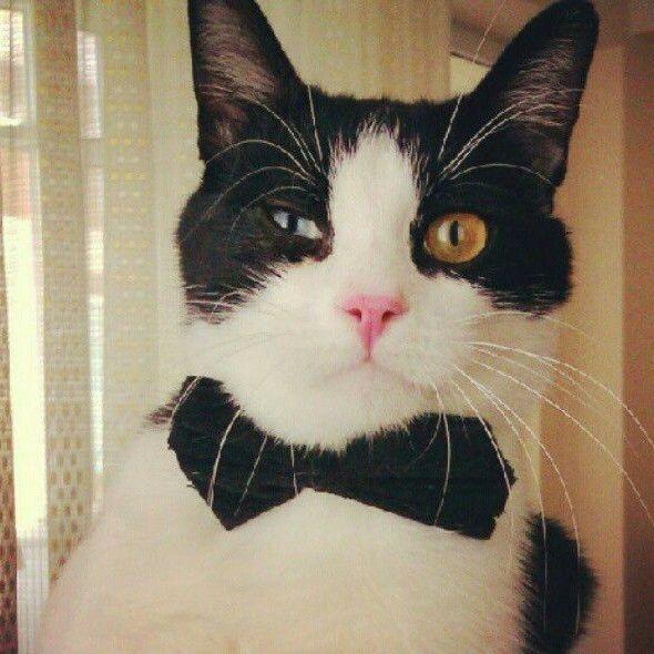 My cat. His name is Mırıl   ❤