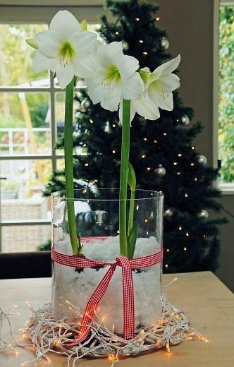 www.berbeesbest.com  Christmas Amaryllis