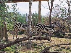 大阪で人気のレジャースポットの内の一つ天王寺動物園は老若男女が楽しめますよ 広大な園内で約200種900点もの動物を飼育していて地の景観を再現したアフリカサバンナゾーンアジアの熱帯雨林ゾーンがあって野生に近い状態で動物達を観察できます tags[大阪府]
