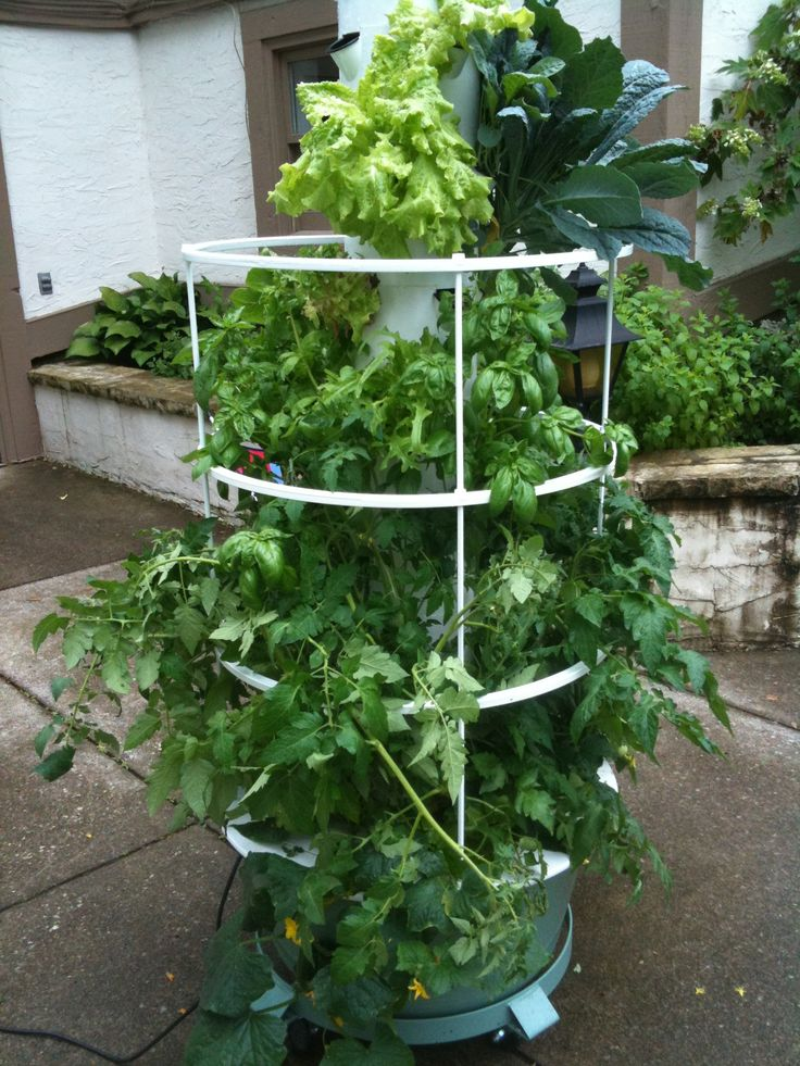 Caged Tower Garden. Discovered I Have A Local Representative With Two Tower  Gardens Now.