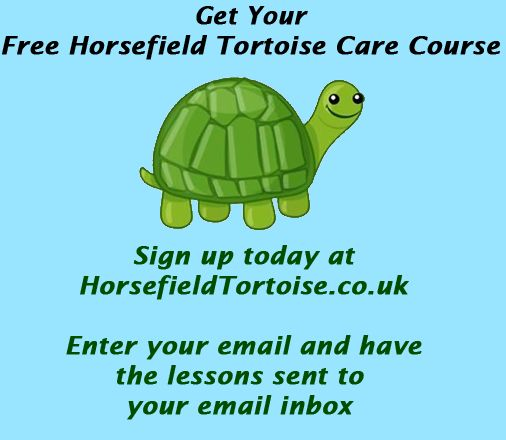free care course at: http://www.horsefieldtortoise.co.uk ‪#‎RussianTortoise‬ ‪#‎Horsefield‬ ‪#‎Tortoise‬ ‪#‎Horsfields‬ ‪#‎horsfield‬ ‪#‎petcare‬