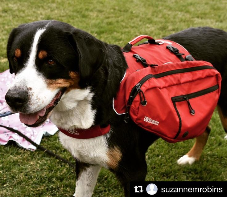 Thanks @suzannemrobins with @dogswithpacks for this great photo! #rcpetproducts #rcpets #canineequipment #ultimatetrailpack #swissmountaindog #dogsofinstagram #doghikers #doghikingadventures