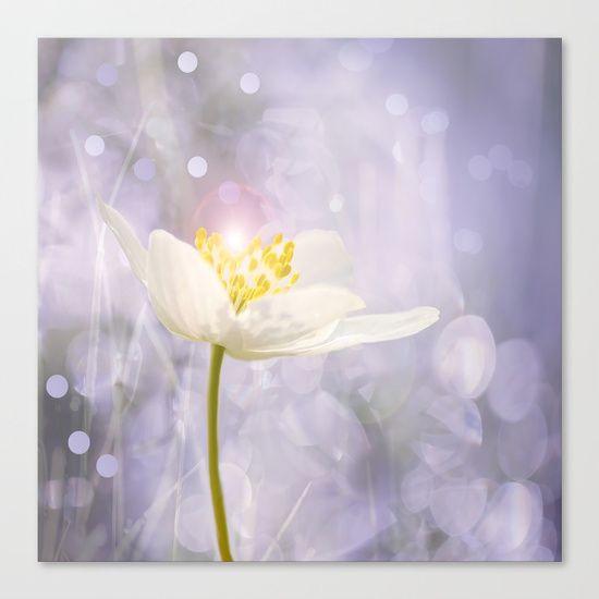 White Flower In The Garden's Enchantments - Bokeh Background #decor #buyart #society6 Canvas Print