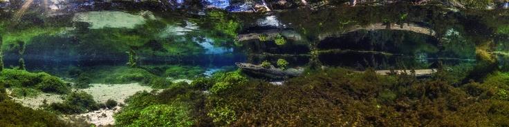 Blue Spring: Bonito River Brazil
