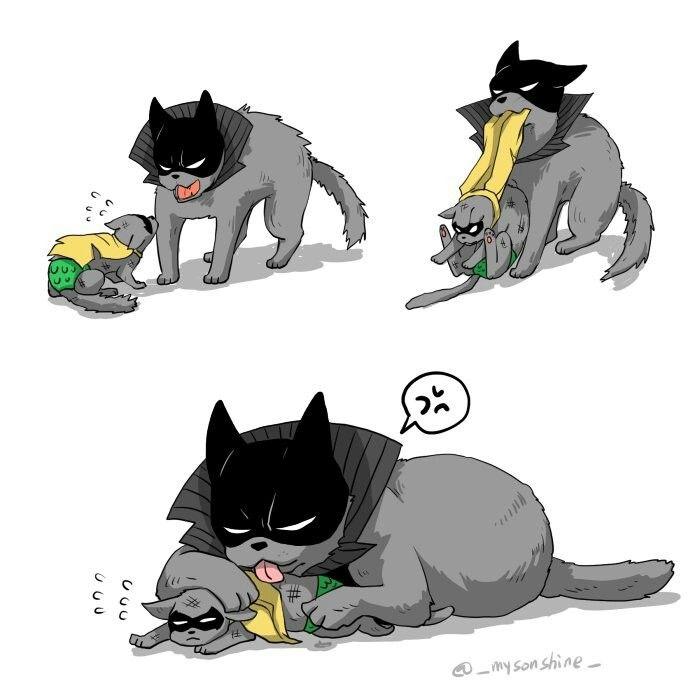 petco cat adoption