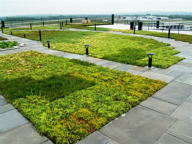 Best Top 25 Ideas About Plants Green Roof On Pinterest 400 x 300