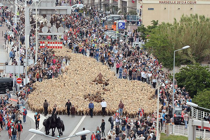 Marseille, France: Thousands of animals are led through downtown Marseille during TransHumance, an event organised by the equestrian troupe of the Théâtre du Centaure Photograph: Boris Horvat/AFP/Getty Images