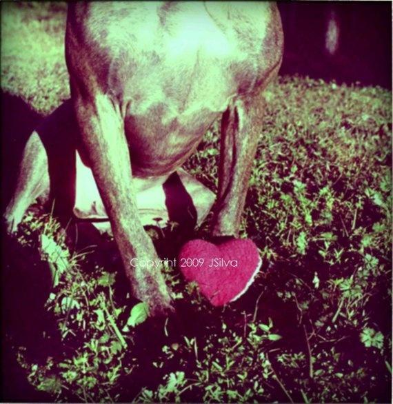I heart You Photograph 5x5 photograph by PibbleSlobberStudio, $8.00