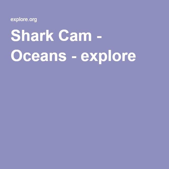Shark Cam - Oceans - explore