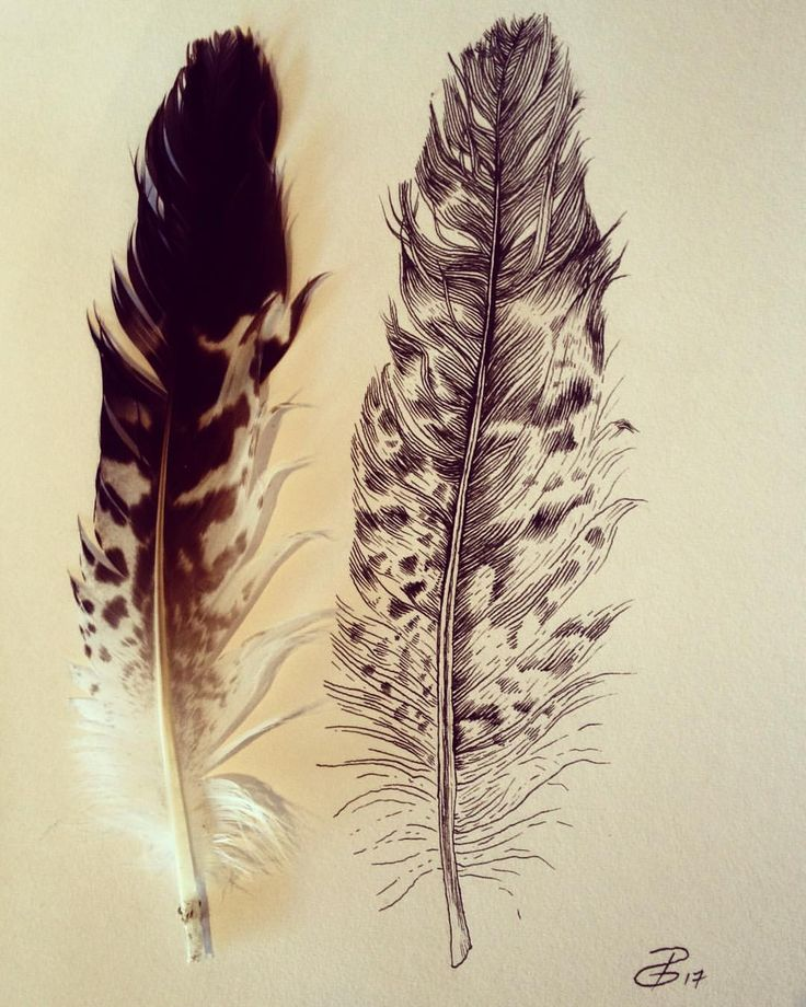 """126 Likes, 5 Comments - Desiree Devloo (@desireedevloo) on Instagram: """"Café vibes☕️ #pen #nature #feathers #drawing #art"""""""