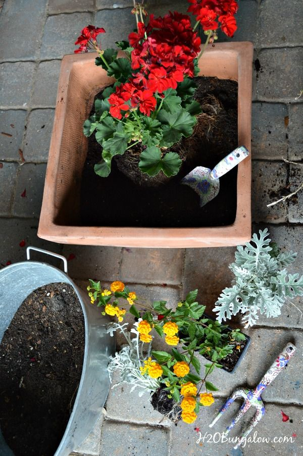 Beautiful mixed planters add curb appeal to any size space. Follow these 5 tips to make your beautiful and long lasting. H2OBungalow