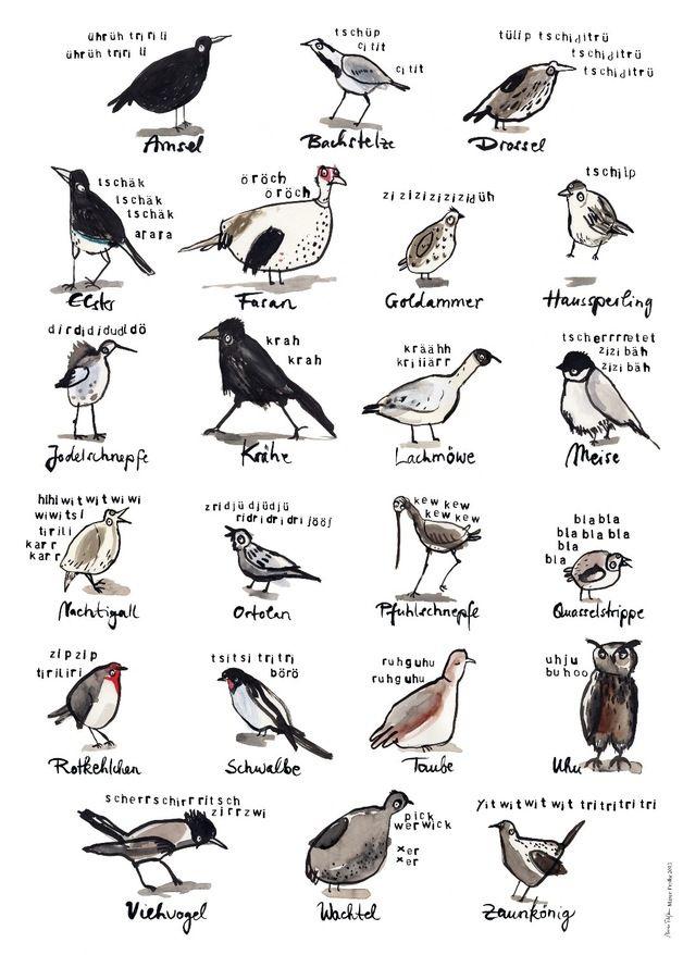 Plakat mit illustrierten Vögeln und Vogelrufen, witzige Wohndeko / funny artprint with illustrated birds, home decor made by ...und hopp via DaWanda.com