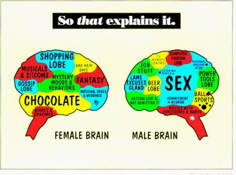 the differences between the male and female roles in the society Research has found some key differences that could explain why we so even if male and female brains b philosophical transactions of the royal society b.