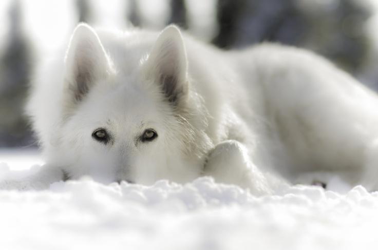 Beautiful dog.. <3