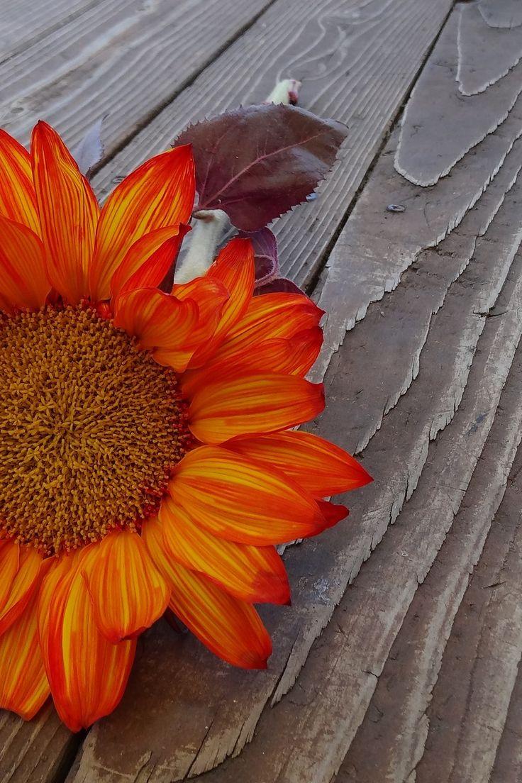 best flowers images on pinterest