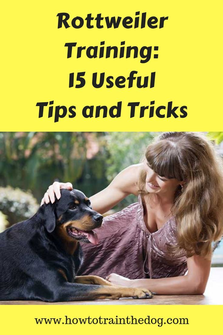 Rottweiler Training 15 Useful Tips And Tricks Rottweiler