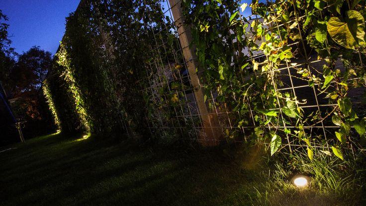 Schutting | Hedra | Klimop | grondspot FLUX | gras | tuin
