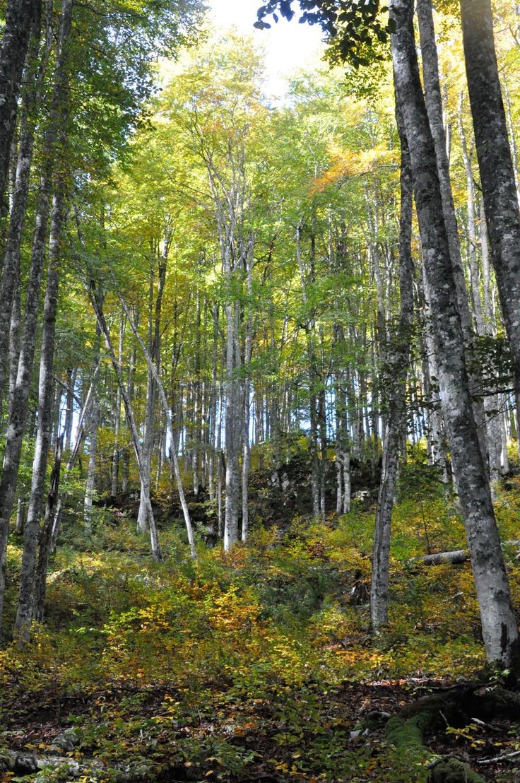 Dans la forêt de Saint-Pé...
