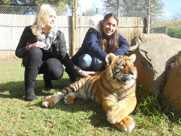 Touching a tiger!