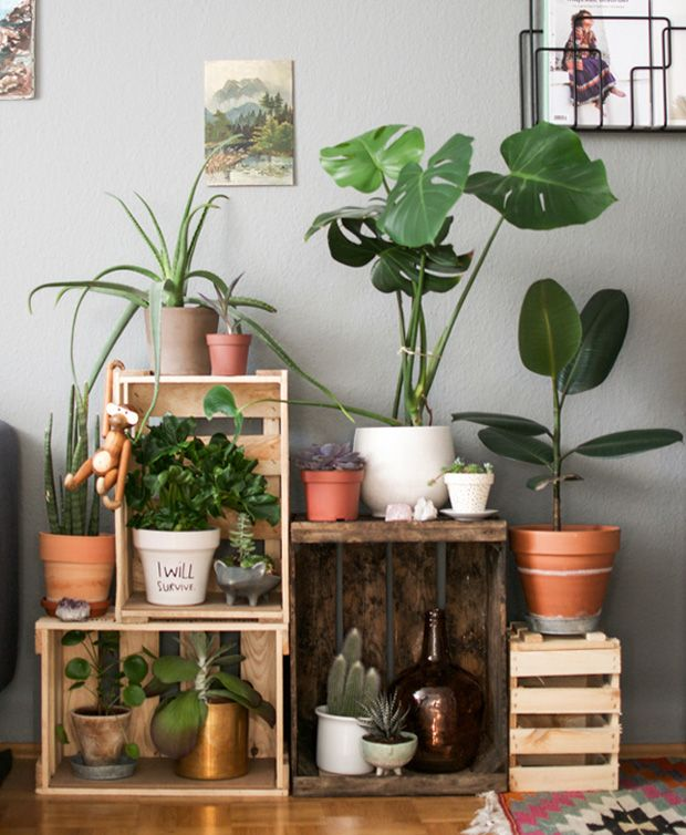 Rubber tree, fiddler fig, succulents, spider plant on wooden frames