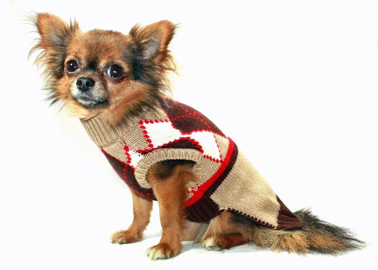 Best Friends World - Hip Doggie Brown Argyle Sweater, €25.00 (http://www.bestfriendsworld.ie/hip-doggie-brown-argyle-sweater/)