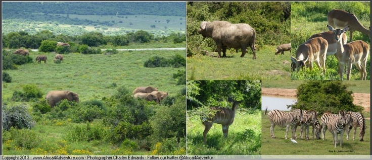 Elephants and other animals in the #Addo area