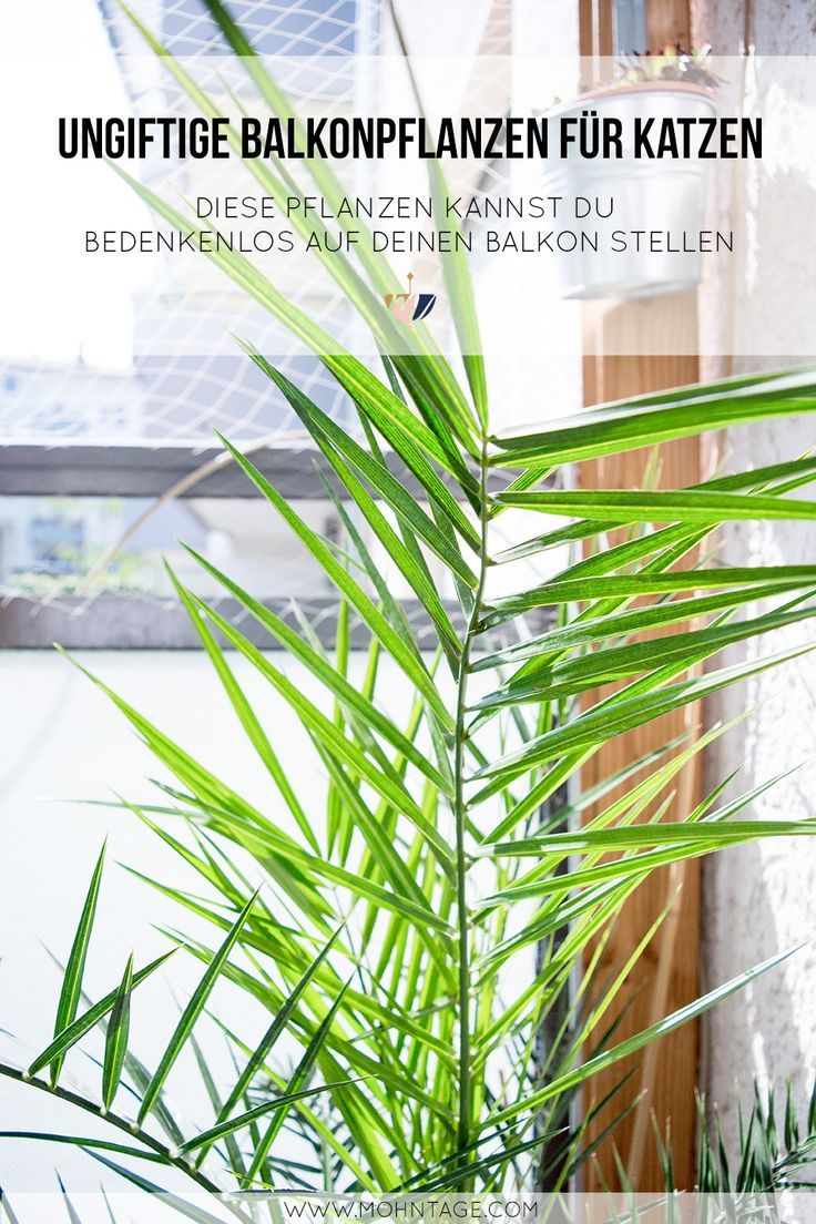 612 best pflanzen diy blument pfe ideen mit pflanzen inspiration images on pinterest. Black Bedroom Furniture Sets. Home Design Ideas
