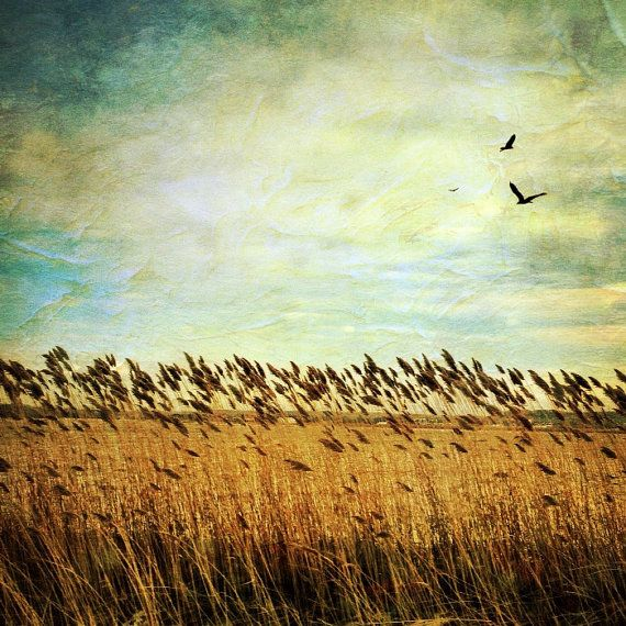wheat field photo country photo nature photography by HolgaJen