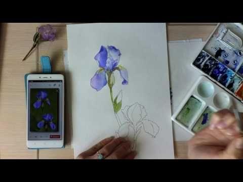 Скетч гелевой ручкой и акварелью Ирисы. Очень ускоренное видео. Speed painting. - YouTube