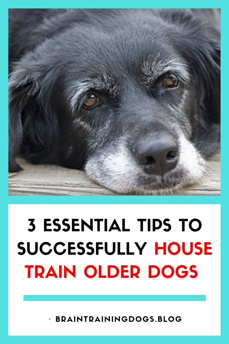 House Training Older Dogs Is A More Delicate Process Than With