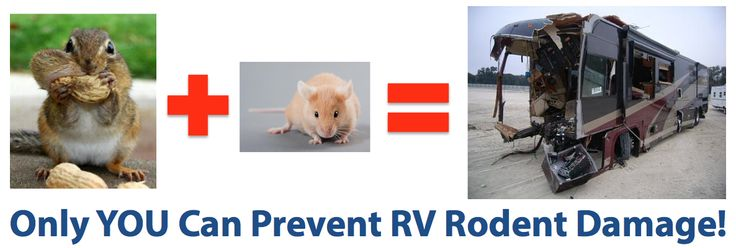 How To Keep Mice And Squirrels Out Of Your Rv These Four
