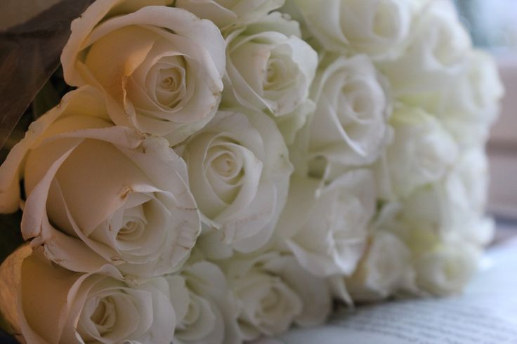 White roses, my favorite <3