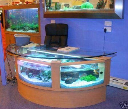 Ha My next office fishtank P Amazoncom 110 gal half circle