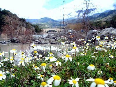 χωριό ζωή στη φύση: ΆΝΟΙΞΗ  Όταν η λίμνη αγκαλιάζει το γεφύρι τέμπλας!...