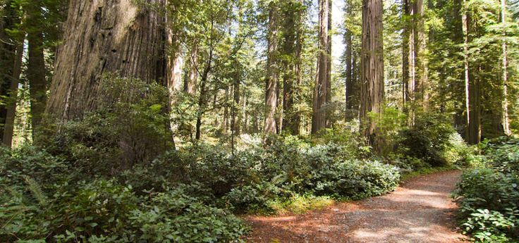 The redwoods in the Grizzly Creek area were what inspired Owen R. Cheatham, founder of Georgia-Pacific Corporation, to preserve this site in perpetuity.  The Cheatham Grove is an exceptional stand of coast redwoods. The park is a quiet place to camp, hike, fish, swim and picnic. The Van Duzen River flows beside the campground.  30 campsites, canoe and kayaking, fishing & swimming in Van Duzen River, group camp &/or picnic area, 4.5 miles of hiking trails, horse shoe pit, environ...