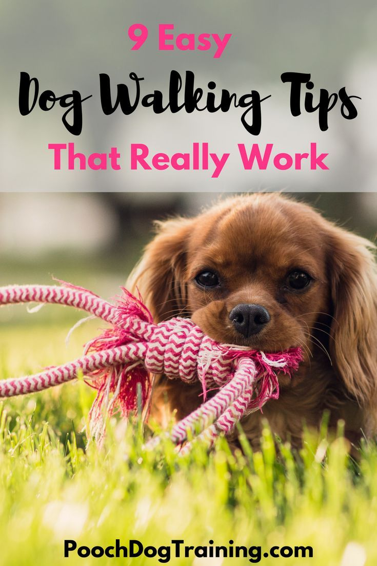 Are you having trouble when walking your dog? Is your dog difficult to control, running ahead of you and pulling on the leash? Or maybe he barks at anything that moves or wants to greet and jump up on strangers you meet. We have some tips for walking your dog to make it a calmer more relaxed outing for you both.Read at poochdogtraining.com @poochdogtrainer