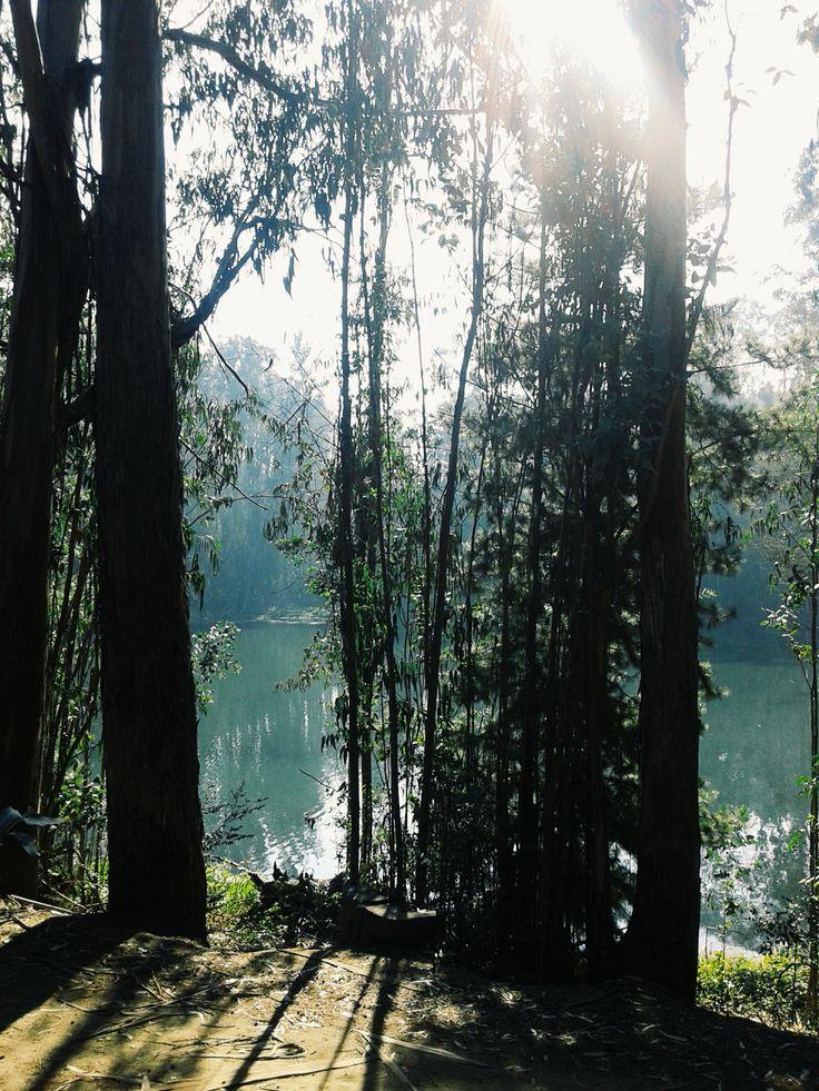 Laguna la Luz de Curauma🌲🌳🌎