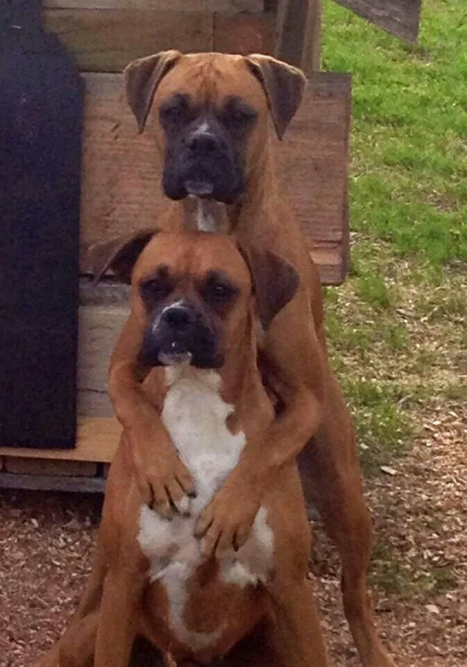 2 beautiful boxers