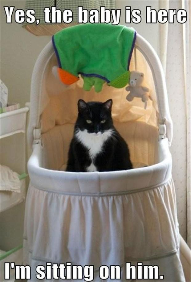 17 Best Images About Funny Cat Captions