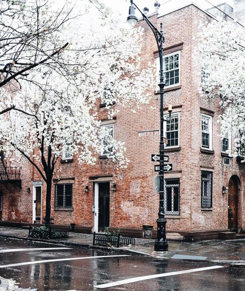 foreverchampagneiglikes: New York is all like here's summer and sunshine early this year, but I have way too many blossom photos left to accept defeat and give up on spring just yet… by sophiesvob http://ift.tt/1qUCBBX