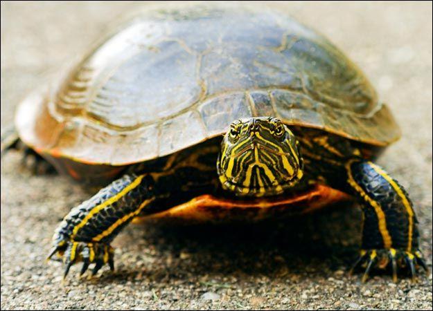 Race a turtle. Then shame it.