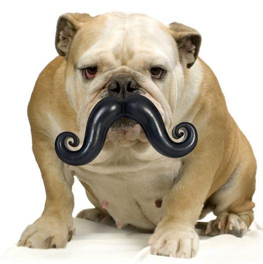Hippe snor voor je hond - Humunga Stache