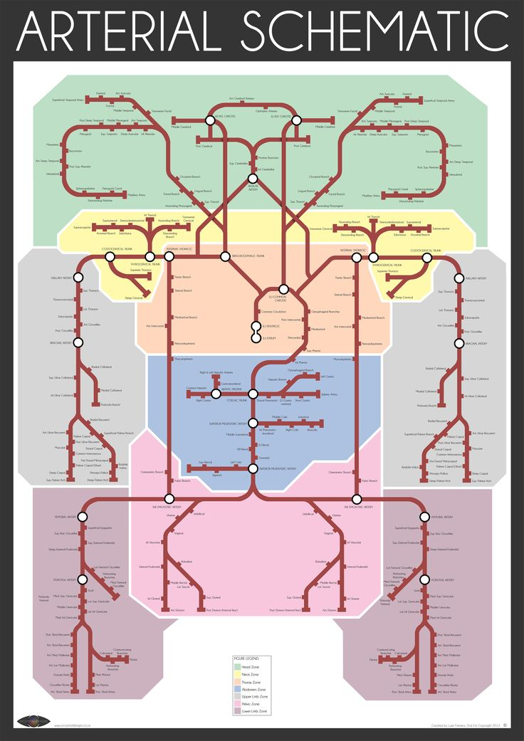 "The ""Arterial Schematic"" represents the intricate three-dimensional human arterial system in a highly simplified two-dimensional design reminiscent of the London Underground Map. Each ""line"" represents an artery within the body; a black circle marks a major vessel, whilst ""stubs"" stemming from the main lines represent the distal vasculature. The coloured ""zones"" represent the main divisions of the human body, for example; the yellow zone indicates the neck."