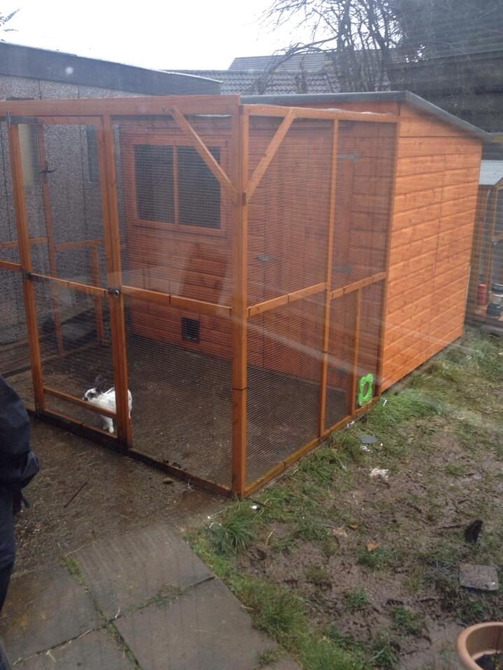 how to set up an aviary for cockatiels