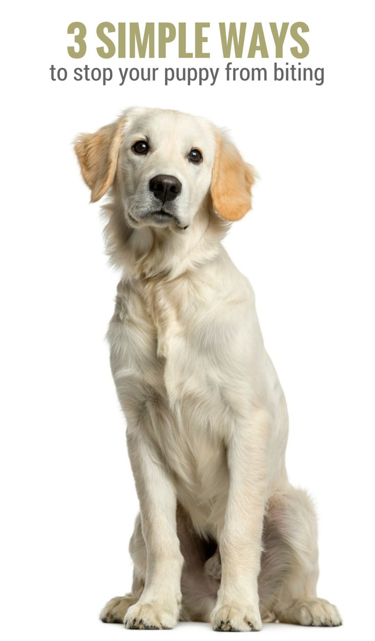 3 Simple Ways To Stop Your Puppy From Biting Puppy Leaks Puppy Training Dog Training Puppies