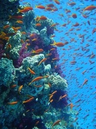 Scuba dive through the great barrier reef
